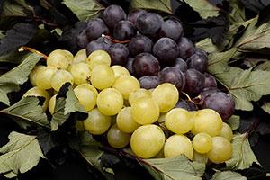 winogrona kalorie, wartości odżywcze, witaminy, minerały..